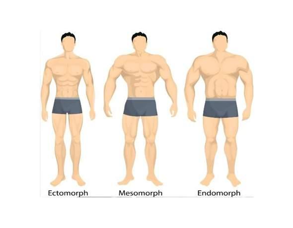 Mit welchem Körpertyp kann man am besten Muskeln aufbauen?