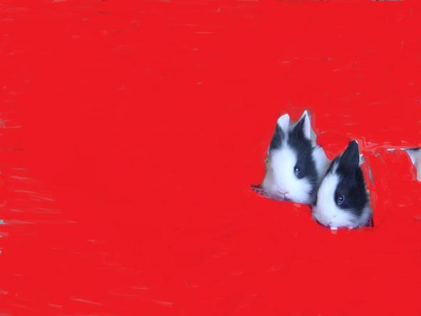 Minnie,ist vorne, und dahinter Mickey,sie sind Zwillinge - (Baby, Kaninchen, Decken)