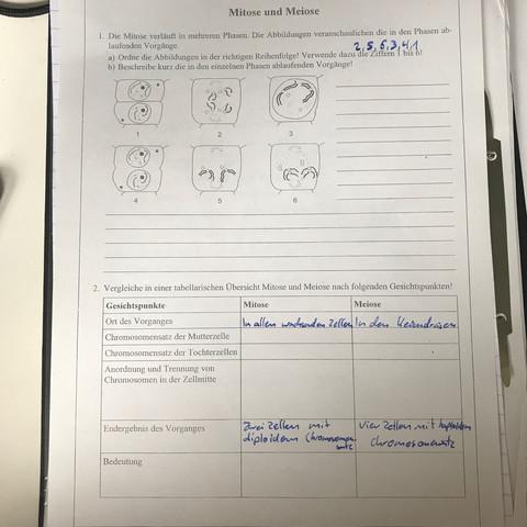 Mitose und Meiose Verlauf und Gemeinsamkeiten/Unterschiede? (Schule ...