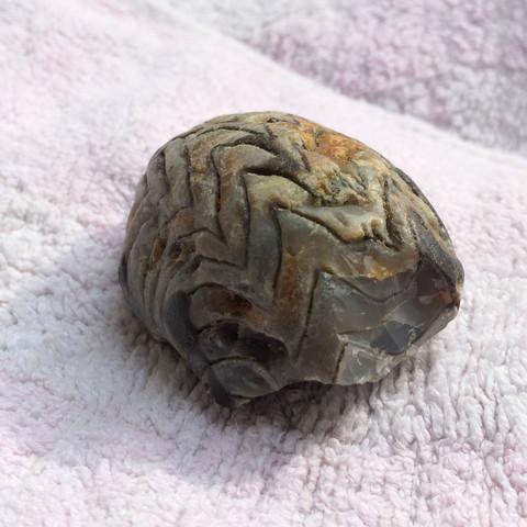 Bild 3 - (Steine, Fossil)
