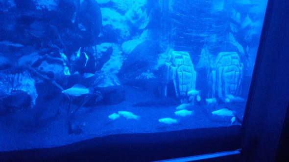 Mollys im Schwarm Aquarium?