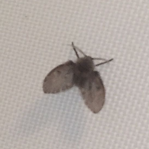 motten in badezimmer fliegen