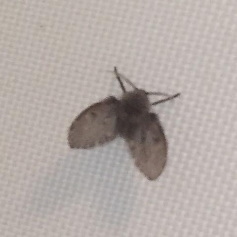 Wunderbar Motten In Badezimmer?