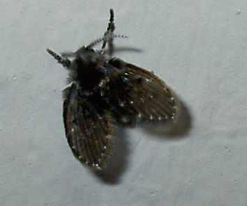 Mottenplage im keller sch dlinge motten for Kleine schwarze fliegen