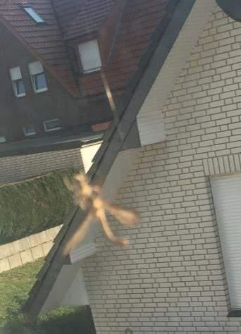 Mücke gegen Spinne?