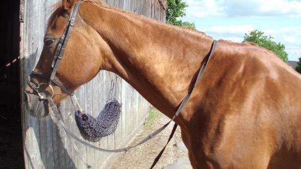 Hals - (Gesundheit, Pferde, Muskeln)