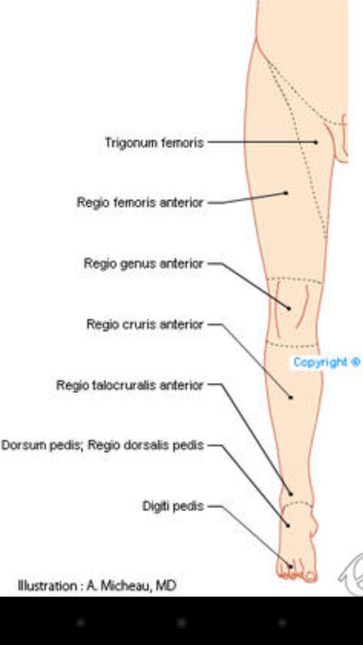 Großartig Muskelzerrung Hinter Knie Fotos - Menschliche Anatomie ...