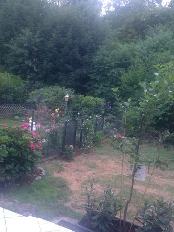 Garten - (Garten, Anwalt, Nachbarn)