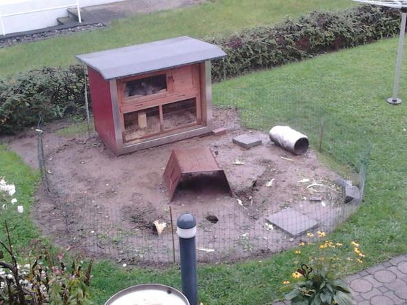 mutter will kaninchen im regen nicht raus lassen weil sie angst hat das sie krank werden. Black Bedroom Furniture Sets. Home Design Ideas