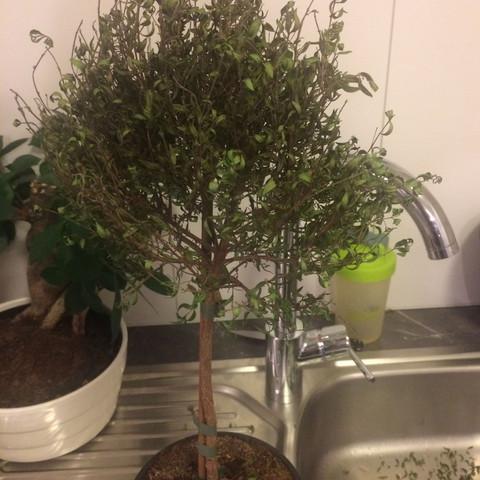 Bild2 - (Garten, Pflanzen, Zimmerpflanzen)