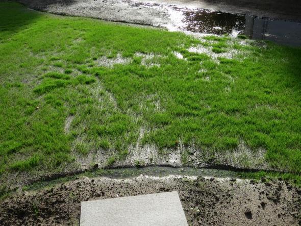 Nach Regen steht der neu angelegte Garten unter Wasser  ~ Geschirrspülmaschine Wasser Steht