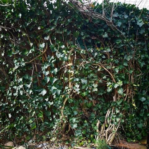 Nachbar möchte einen neuen Zaun, ich den alten belassen?