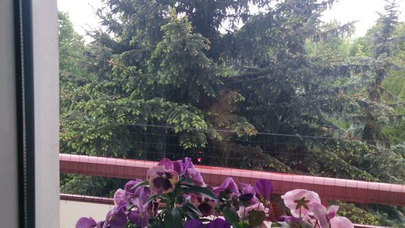 Blick vom Balkon, 2014 - (Mietrecht, Mietmängel)