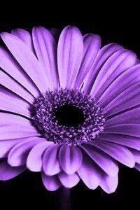 Namen blumen mit Blumen als