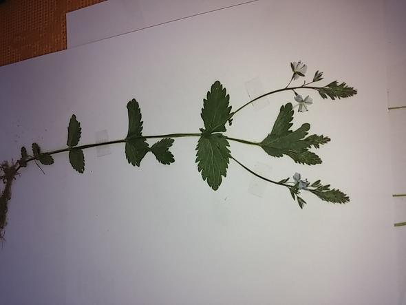 bild2 - (Garten, Pflanzen, Natur)