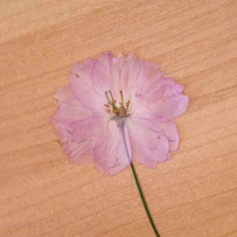 Pflanze 2 - (Biologie, Pflanzen, Pflsnzenname)