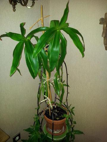 Grünpflanze - (Sibirien, pflanzenname)