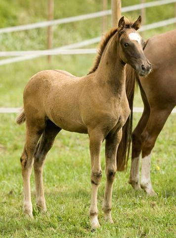 Pferdenamen mit b