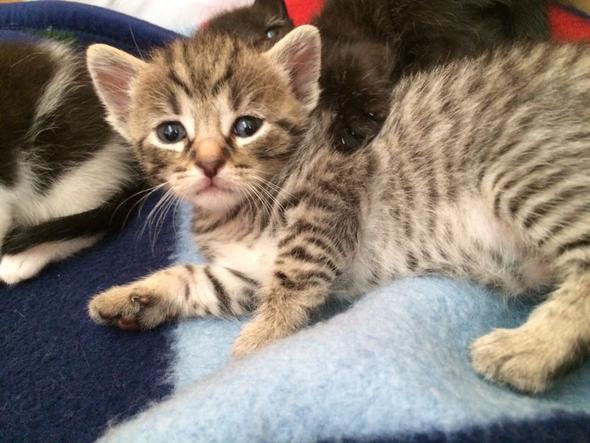 Mein Baby - (Tiere, Name, Katzen)