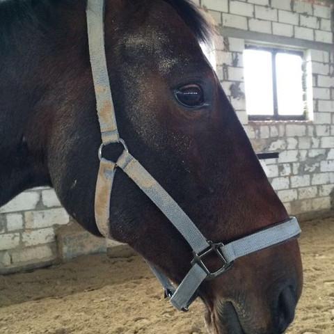 ..... - (Pferde, Name)