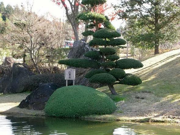 Name Vom Japanischem Baum Garten Natur Japan