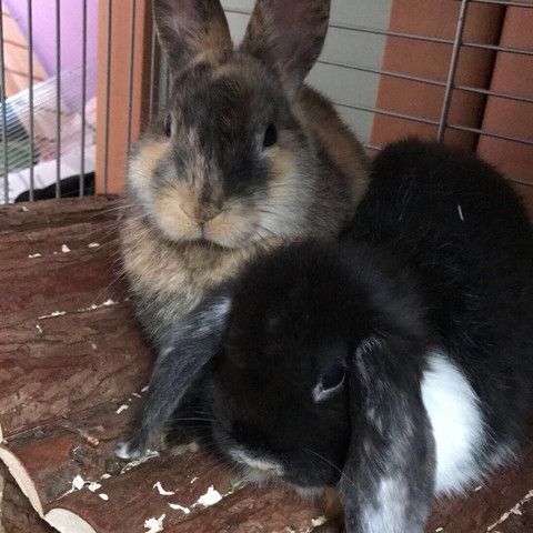 ..... - (Tiere, Haustiere, Kaninchen)