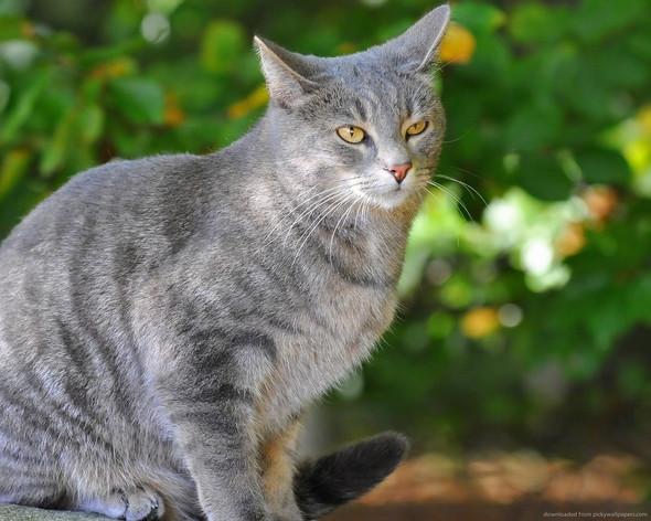 ...Pfote - (Name, Warrior Cats)