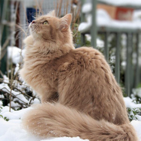 """""""Streuner""""^^ - (Katzen, Namen, Warrior Cats)"""