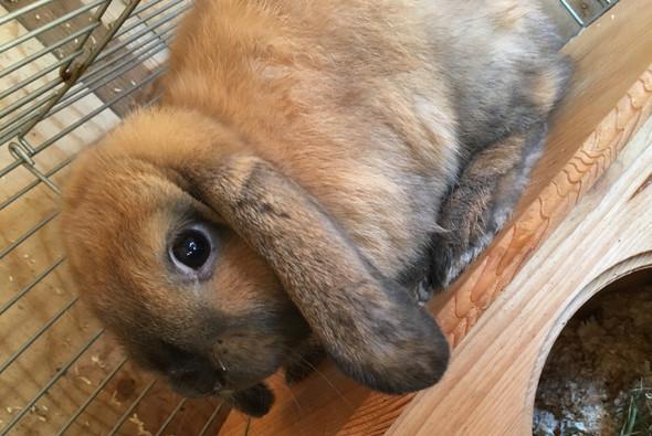 Bild - (Name, Kaninchen, Namensvorschläge)