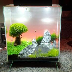 Nano aquarium was muss ich beachten fische einrichtung for Kampffisch aquarium