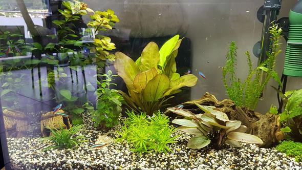 Aquarium - (Fische, Aquarium, neonfisch)