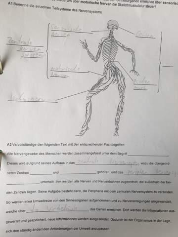 Nervensystem Biologie?