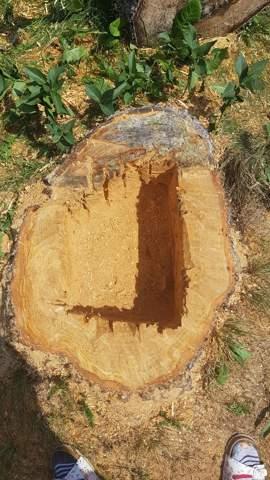 Neue Pflanze in Baumstumpf setzen?