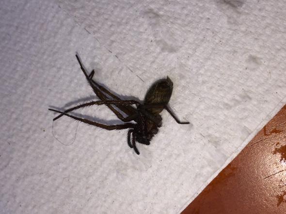 Bild 1 - (Tiere, Spinne, Tierart)