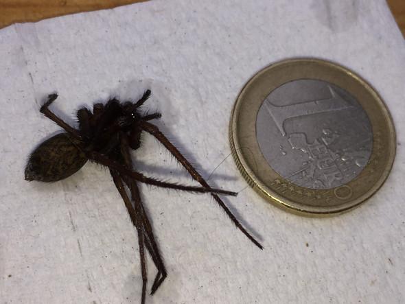 Bild 2 - (Tiere, Spinne, Tierart)