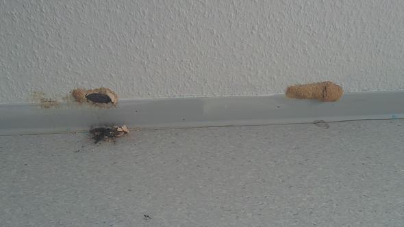 neue wohnung ist es ein pilz schimmel pilze kokon. Black Bedroom Furniture Sets. Home Design Ideas