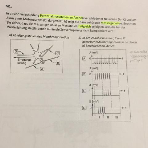 Neuronales Verrechnungsprinzip?