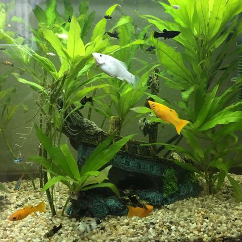 Mein Aquarium  - (Aquarium, 60l, Nitritfilter)