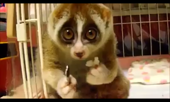 süß - (Tiere, süß)
