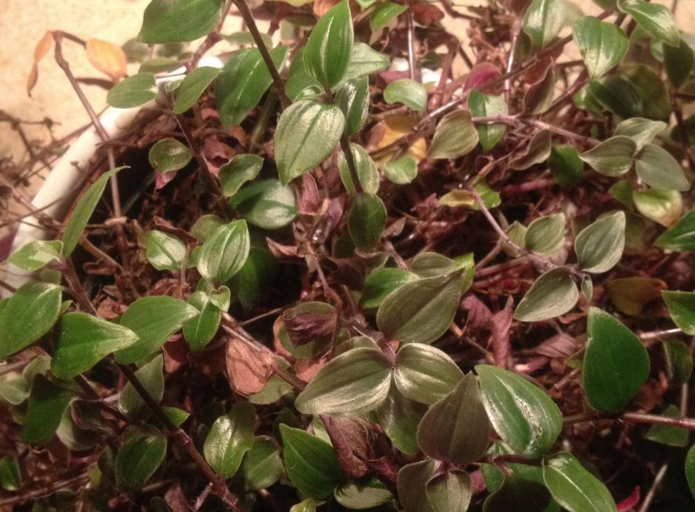 nochmal mit foto name einer pflanze gesucht tiere pflanzen gift. Black Bedroom Furniture Sets. Home Design Ideas