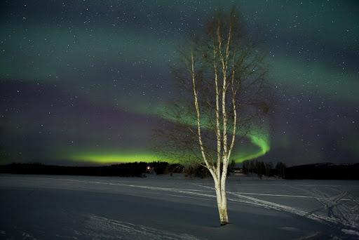 Polarlicht - (Schweden, Polarlichter, Nordlichter)