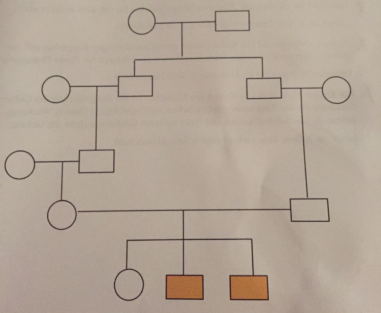 Normalerweise bearbeiten wir Stammbäume mit Tabellen aus den Allelen ...