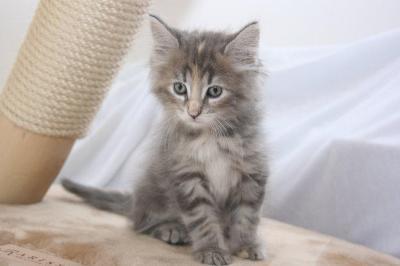 kitten :) - (Katze, Norwegen, Einzelhaltung)