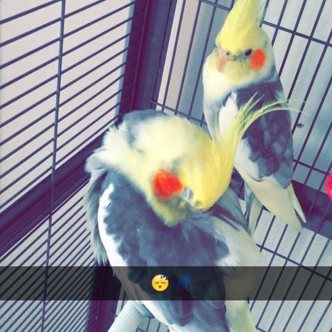 Männlichen  - (Vögel, schwul, weiblich)
