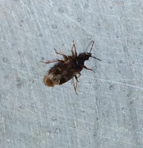 Kleine Schwarze Käfer Im Garten Die Stechen Hylenmaddawardscom
