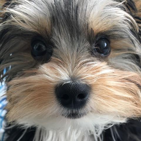 Das ist der kleine - (Hund, Reise, Welpen)