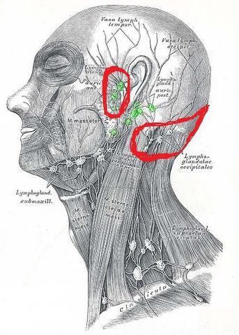 Ohren/Backe und Hinterkopf schlimme schmerzen... (Arzt, Krankheit ...