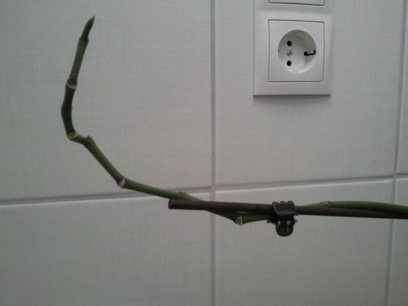 orchidee verbl ht schneiden aber wie bitte um hilfe. Black Bedroom Furniture Sets. Home Design Ideas