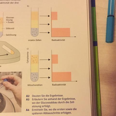 Tolle Biologie Zellatmung Arbeitsblatt Antworten Ideen ...