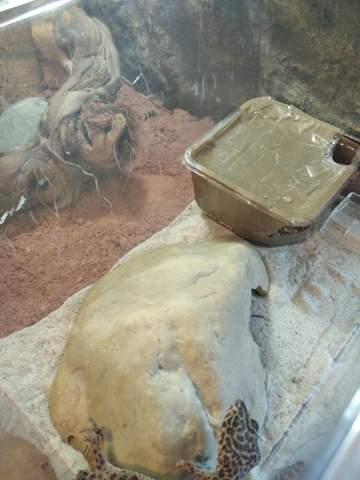 Paket Klebeband für Reptilien gefährlich?
